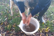 Sal having muddy legs washed!