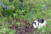 Sal sitting in amongst the bluebells
