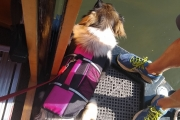 Sally sporting her life jacket