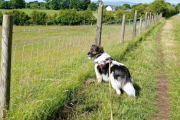 Sal looking for something to chase!