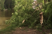 The tree down in Gnosall