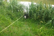 Sally loves to drink from the canal - yuk!